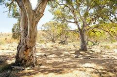 Australijska odludzie oaza Zdjęcia Royalty Free