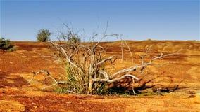 Australijska odludzie pustynia zbiory