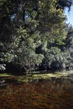 Australijska rzeka Fotografia Stock