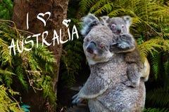 Australijski koala niedźwiedzia rodzimy zwierzę z dzieckiem i Ja Kochamy Australia tekst Zdjęcie Stock