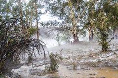 Australijski krzak w mgle po burzy Fotografia Royalty Free