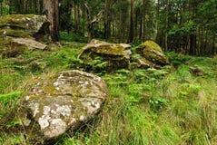 australijski las Zdjęcie Royalty Free