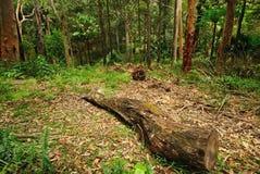 australijski las Obrazy Royalty Free
