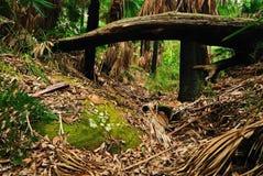 australijski las Obraz Royalty Free