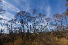 Australijski odludzie z niebieskimi niebami zdjęcie stock