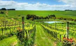 australijski piękny winnica Fotografia Royalty Free