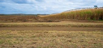 Australijski trzciny cukrowa gospodarstwa rolnego krajobraz Obraz Royalty Free