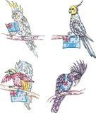 Australijskie papugi Fotografia Royalty Free