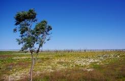 Australijskiej pustyni oaza Zdjęcia Stock