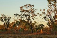 Australisch Binnenland in de Avond Stock Afbeeldingen