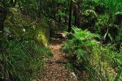 Australisch Bos Stock Foto's