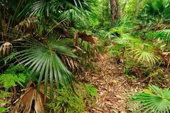 Australisch Bos Stock Foto