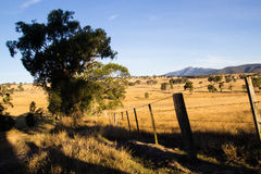 Australisch Bush bij Zonsondergang Royalty-vrije Stock Foto's