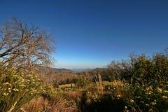 Australisch Hoog Land Stock Foto