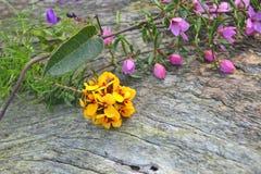 Australisch inheems bloemenboeket Royalty-vrije Stock Foto