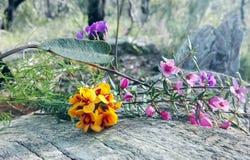 Australisch inheems bloemenboeket Stock Fotografie