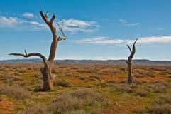 Australisch landschap stock foto's
