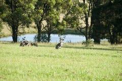 Australisch landschap. Royalty-vrije Stock Foto's