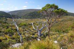 Australisch landschap in Tasmanige Stock Foto
