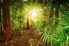 In Australisch regenwoud Stock Foto's