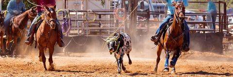 Australisch Team Calf Roping Rodeo Event stock foto's