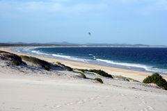Australisch Windswept Strand stock foto's