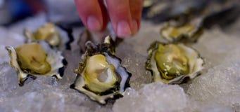 Australische Austern auf Eis stock video footage