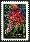 Australische Briefmarke blühender Pflanze Grevillea Stockfotos