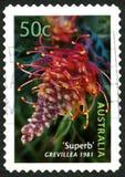 Australische Briefmarke Grevillea Lizenzfreie Stockfotos