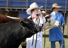 Australische Cowgirlausstellungen prize Angus-Stier an der jährlichen Landshow angemessen Stockbild
