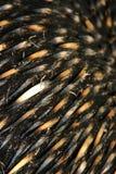 Australische Echidna-Spulen Lizenzfreie Stockfotografie
