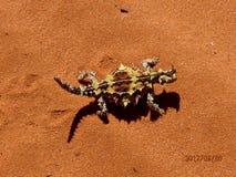 Australische Eidechse - dorniger Teufel stockbild