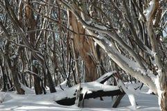 Australische gombomen in de sneeuw Stock Afbeeldingen
