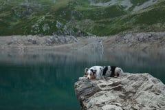 Australische Herder in aard door het meer Het reizen met een hond in de bergen Huisdierenavontuur stock fotografie