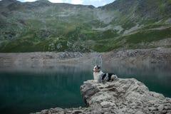 Australische Herder in aard door het meer Het reizen met een hond in de bergen Huisdierenavontuur stock foto