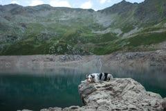 Australische Herder in aard door het meer Het reizen met een hond in de bergen Huisdierenavontuur stock afbeeldingen