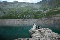 Australische Herder in aard door het meer Het reizen met een hond in de bergen Huisdierenavontuur royalty-vrije stock afbeeldingen
