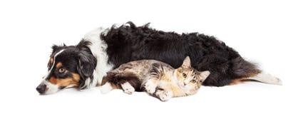 Australische Herder Dog en Cat Laying Together Stock Afbeelding