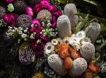Australische inheemse banksia en madeliefje wilde bloemen Stock Afbeeldingen