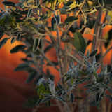 Australische inheemse installatie Stock Fotografie