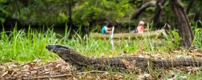 Australische Kantmonitor in de wildernis Royalty-vrije Stock Foto's