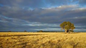 Australische Landschaft stock video