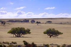 Australische Landschaft am sonnigen Tag Lizenzfreies Stockbild