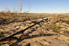 Australische Landschaft am sonnigen Tag Stockbild
