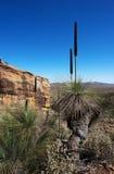 Australische Landschaftsszene Stockfotos