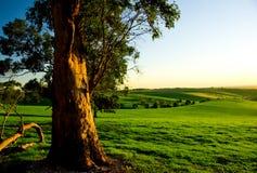 Australische landwirtschaftliche Landschaft Lizenzfreie Stockfotografie