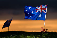 Australische Markierungsfahne mit Mohnblumen Stockbilder