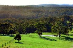 Australische paddock Stock Fotografie