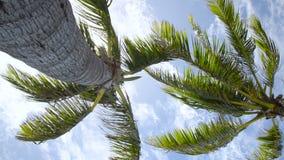Australische palmen van neer hieronder stock video