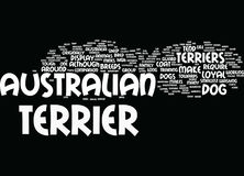 Australische Terriers maakt Loyal Pets Word Cloud Concept Stock Foto